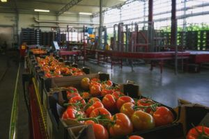 Farming 101: Meeting The Construction Demands Of Future Fresh Produce Packhouses